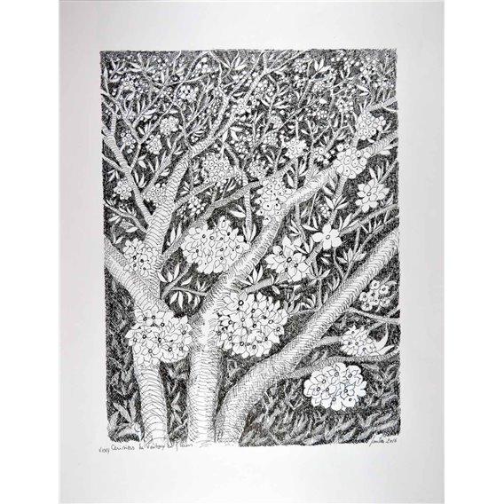 Cerisiers du Ventoux en fleurs