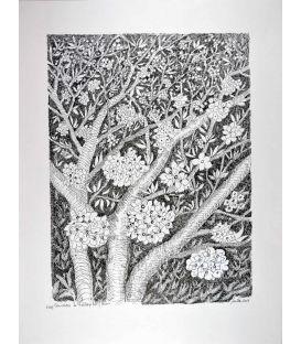 Cherry trees of Ventoux