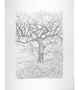 Chêne en hiver