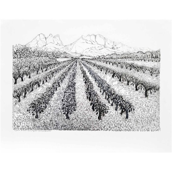 Vignes en automne dans les Alpilles