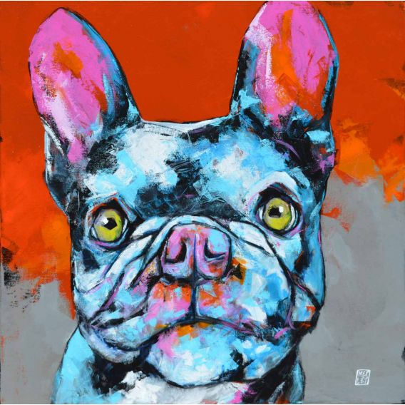 Dingo - The french Bulldog