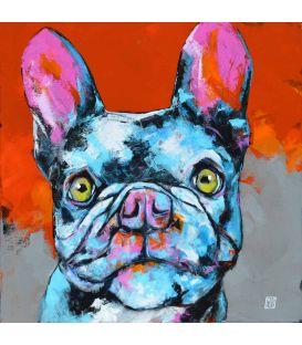 Dingo - Le bouledogue français